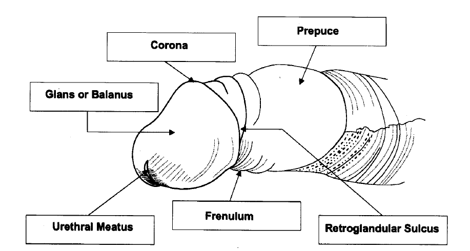 circumcizia verucilor genitale