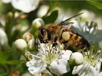 Punture d 39 insetto - Cimici dove vivono ...